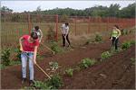 Помощь волонтеров в ботаническом саду. Открыть в новом окне [77Kb]