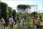 Участок лиан в Уфимском ботаническом саду