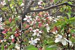 Новый участок ботанического сада ОГУ. Открыть в новом окне [77Kb]