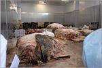 Экскурсия студентов ФПБИ на мясоперерабатывающий завод ORENBEEF. Открыть в новом окне [137 Kb]