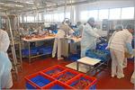 Экскурсия студентов ФПБИ на мясоперерабатывающий завод ORENBEEF. Открыть в новом окне [109 Kb]