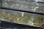 Разработка технологии использования наноматериалов в аквакультуре. Открыть в новом окне [121Kb]