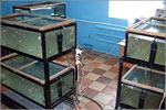 Разработка технологии использования наноматериалов в аквакультуре. Открыть в новом окне [130Kb]