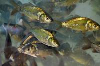 Направление подготовки «Водные биоресурсы и аквакультура»