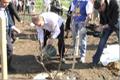 Закладка аллеи сакуры в ботаническом саду ОГУ